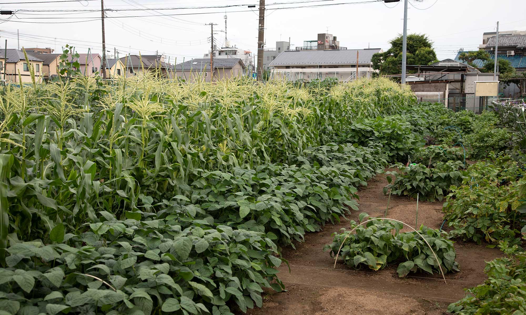 練馬区農業体験農園園主会
